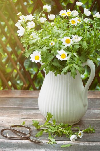 Daisies in jug on table