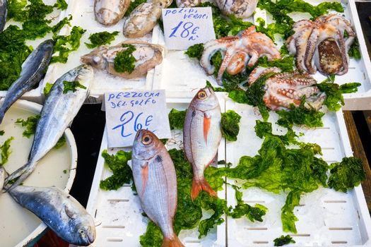 Fish and squid for sale