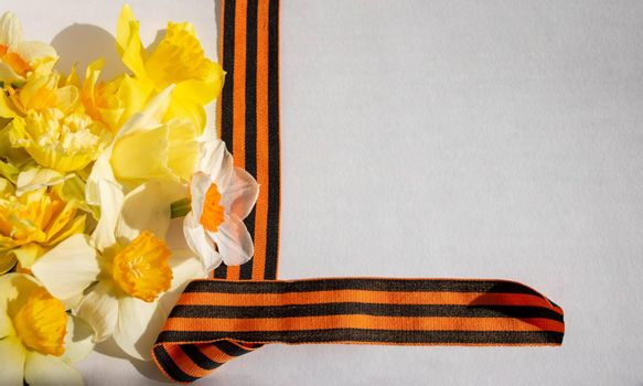 Daffodils and St. George ribbon on a white background. St. George's Ribbon-a symbol of the Great Victory.
