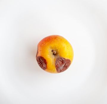 Close-up of a rotting apple isolated on a white background with a copy space. Biofruits tend to rot faster than bio-modified ones. The concept of healthy organic food.