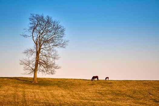 A mare and foal grazing on early spring grass.