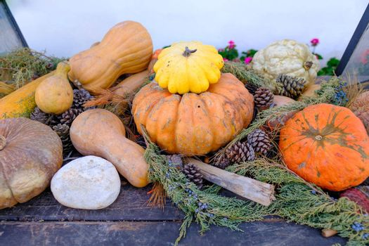 colorful yellow squashes and orange and white objects decorated on a table