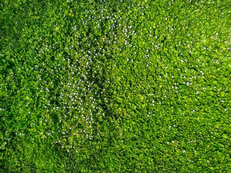 texture of grass with violets all around in a sunny day
