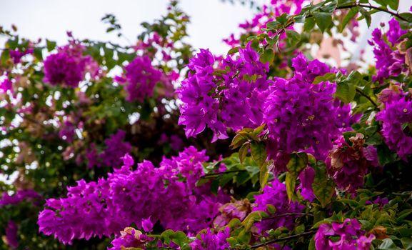 Purple flowers on a sunny deta