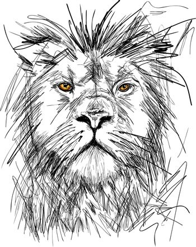 Sketch of Big adult lion portrait with rich mane