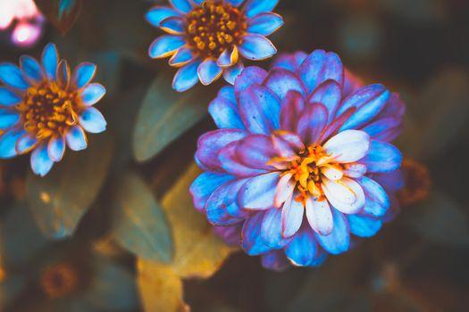 Gerbera flowers beautiful tone