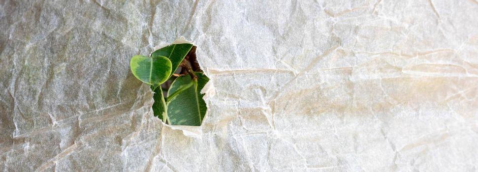 Bright green leaves of the plant in a hole on crumpled craft paper. Environmental concept. Place for your text.