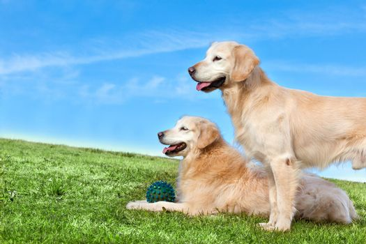 Pets and dogs.training and educating dogs