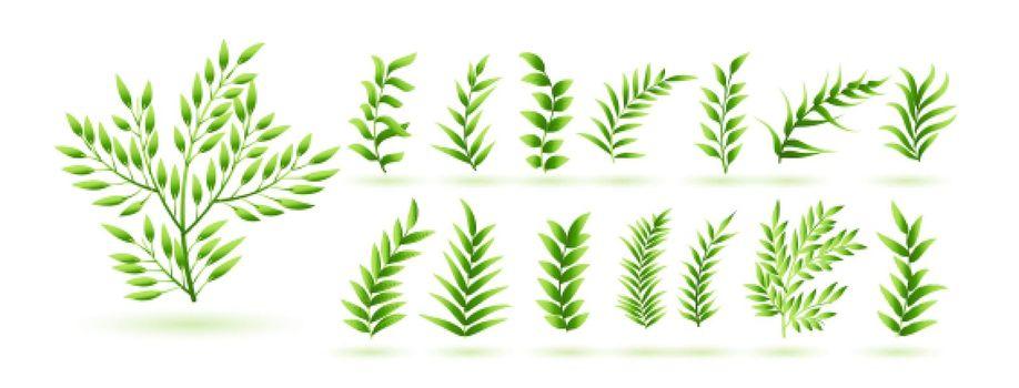 natural green herb leaves botanical collection design