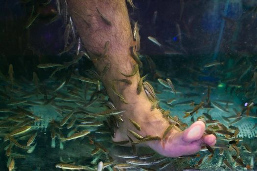 Small fish cleaning a man's foot in a tank in Phuket, Thailand.