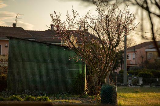 Tree in the slum