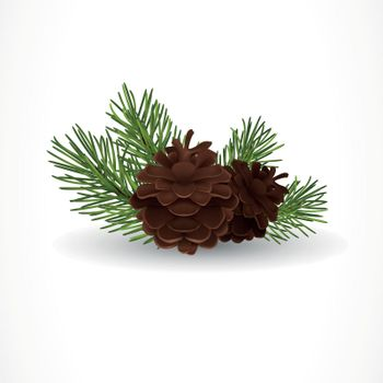 Pine Tree Cones and Twigs