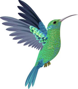 Beautiful flying hummingbird