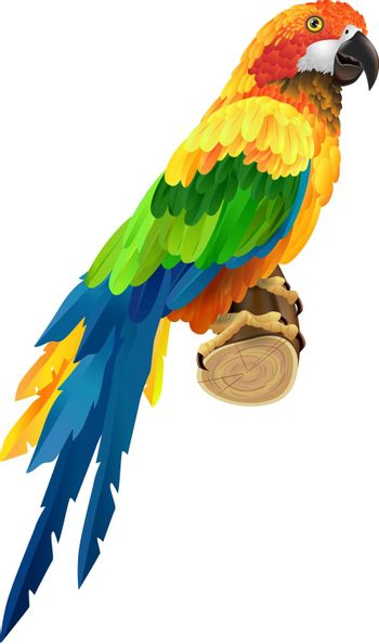 Beautiful colorful parrot on twig