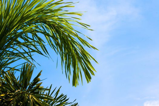 Green tropical palm trees in the blue sunny sky background with copy space