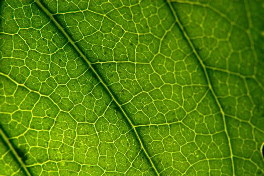 Caterpillar Territory