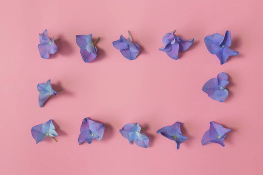 Flat lay with hydrangea or hortensia blue-purple petals on pink background