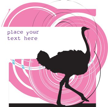 Ostrich illustration