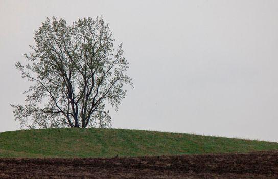Lone Tree Saskatchewan