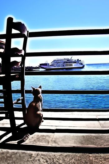 oil colors style which represents a grey cat that observes the port and the ferry from the terrace of the house
