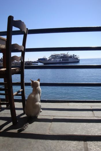 Digital colors style which represents a grey cat that observes the port and the ferry from the terrace of the house