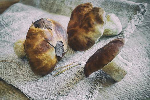 On the table on a linen napkin are fresh mushrooms boletus.