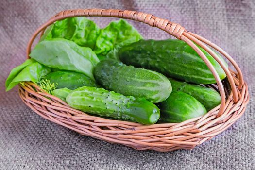 On a linen cloth represented the young green cucumbers in a wicker basket.