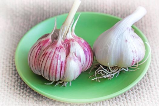 On the table on a green ceramic plate lay two heads of garlic.