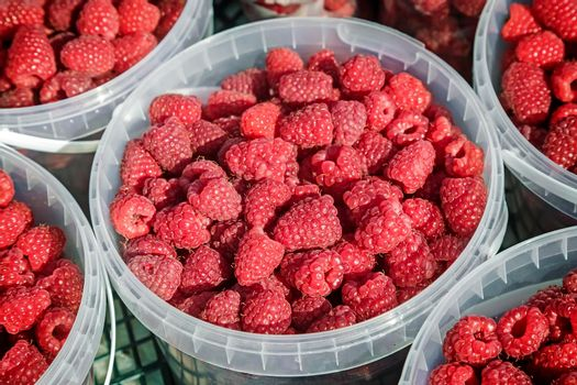Ripe red raspberries in small containers for sale at the store.