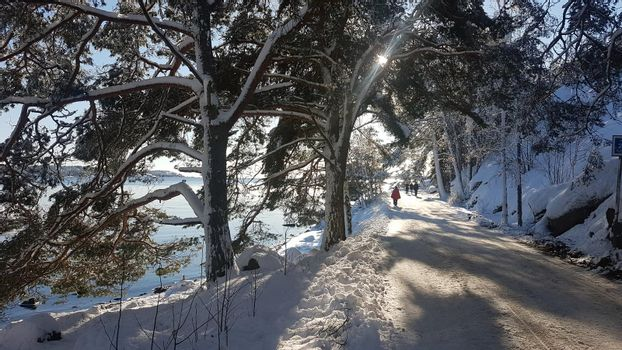 A glimpse of a tree-lined street near the sea with people walking around in a winter day in Scandinavia