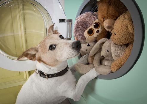 dog housework chores