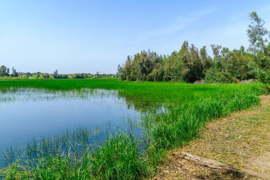 Berekhat Yaar (forest pool) nature reserve, in Hadera