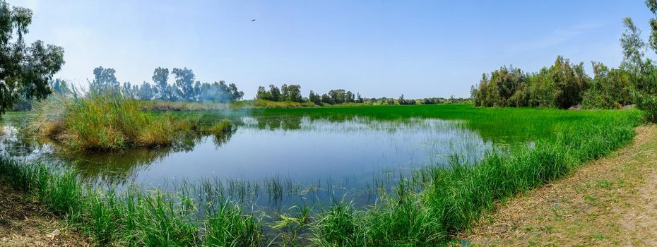 Panorama of Berekhat Yaar (forest pool) nature reserve, in Hadera