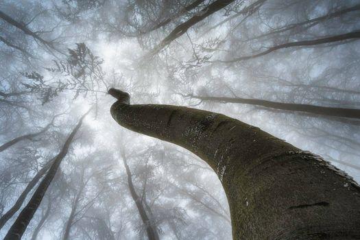 Wintertime trees crown