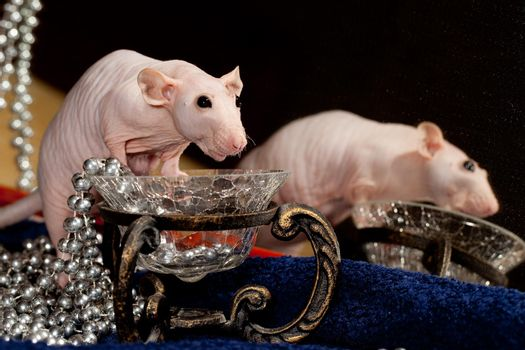 Rat, necklace and mirror