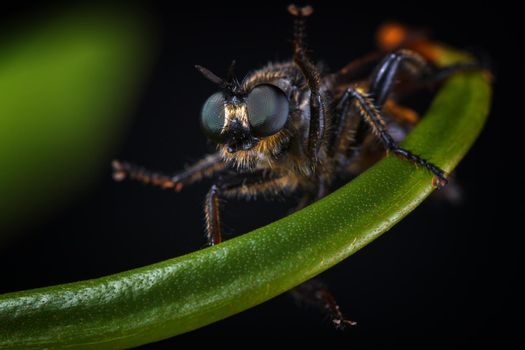 A terrible fly in the dark
