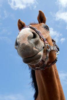 Close up horse muzzle portrait