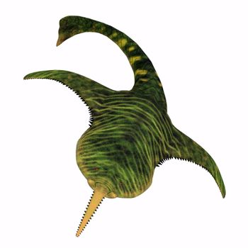 Doryaspis Fish Head
