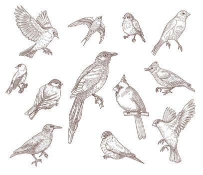 Set of bird species engraved sketches vector illustration