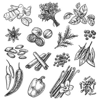 Spices sketches set