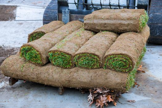 Pallet with stacked rolls of lawn in the for new lawn, grass installation.