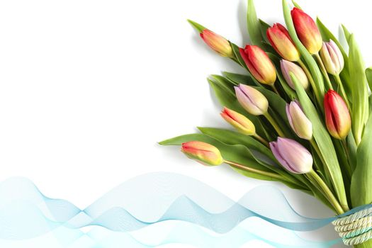 Beautiful tulip flowers on white background. Beautiful fresh bouquet of spring tulips, ribbon over white. Spring, celebration, birthday, Mothers day, Women's Day, Easter, Valentines day, gift. Mock up