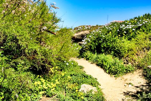 Path between green vegetation and flowers under blue sky in spring in Azenhas do Mar village, Lisbon, Portugal