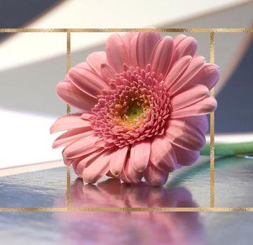 Beautiful pink flower on pastel background with golden frame. Spring summer gerbera flower on reflection background