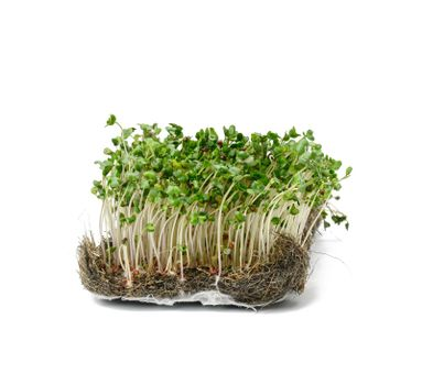 green broccoli sprouts on a white background, healthy microgreen