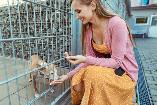 Woman petting a dog in the animal shelter