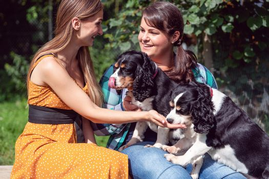 Women friends playing with dogs in the animal shelter