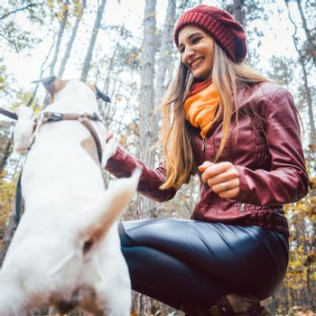 Woman and her dog in playful mood