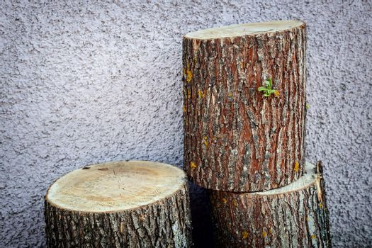 The trunk of a sawn tree, cut into three parts