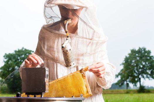 Beekeeper filling honey extractor